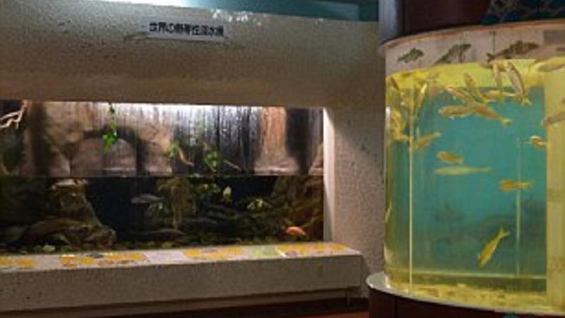 acvariu abandonat | Sursa: Getty